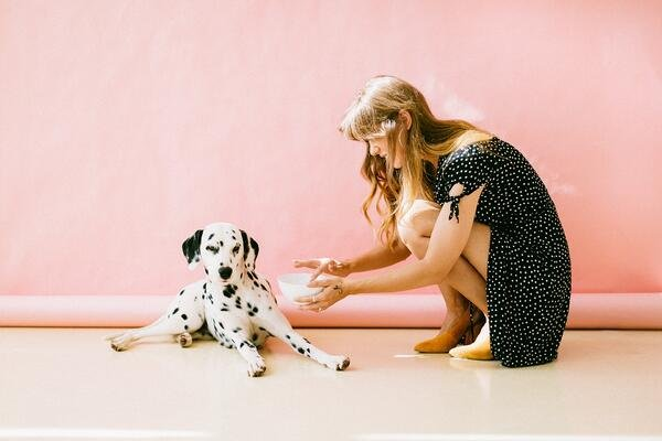white and black dalmatian dog sitting in front-of woman near