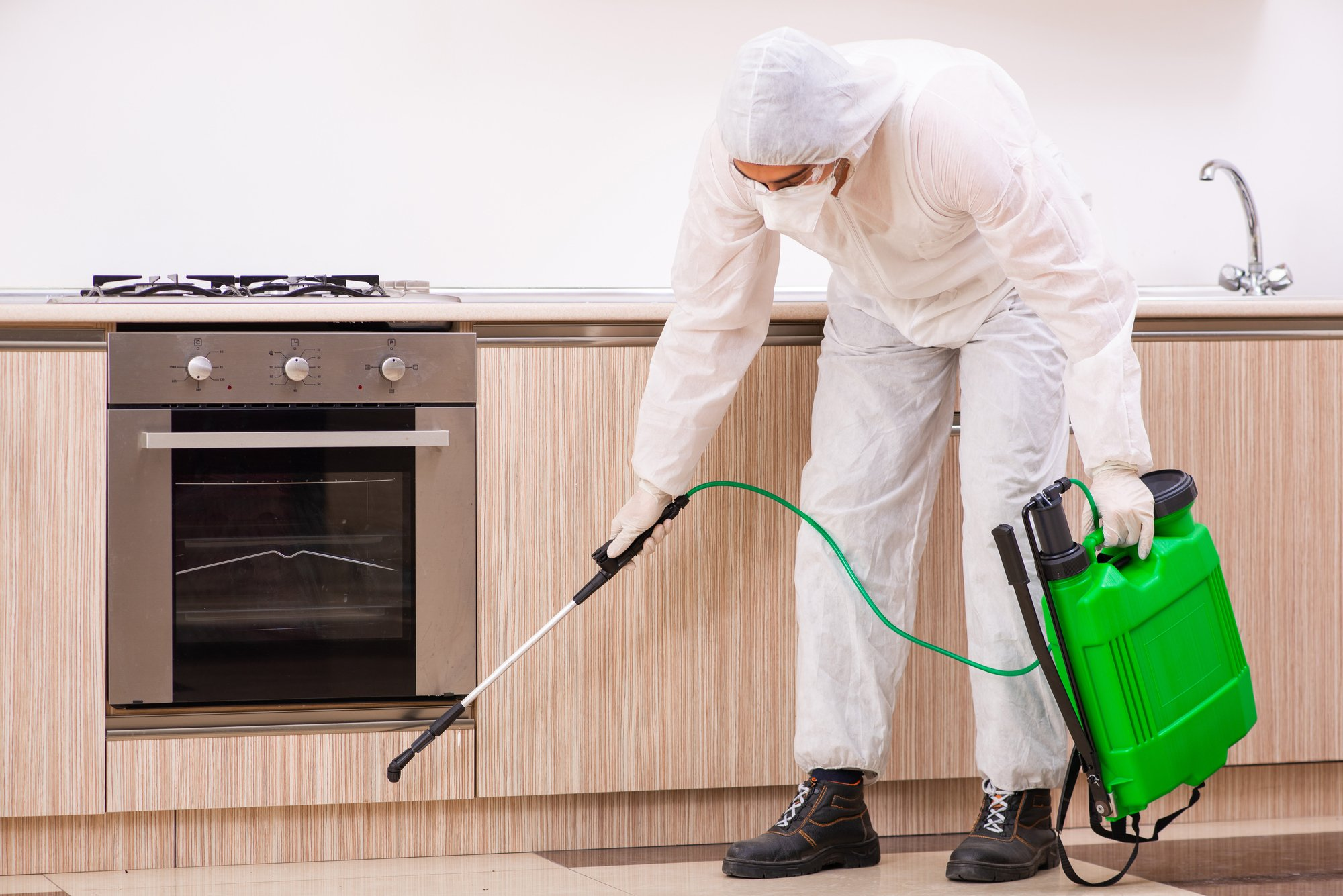 Professional contractor doing pest control at kitchen